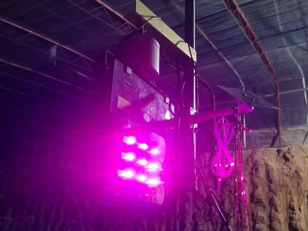 植物生长灯厂家生产的补光灯,对人体有伤害么